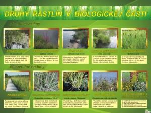 Druhy rastlín v biologickej časti
